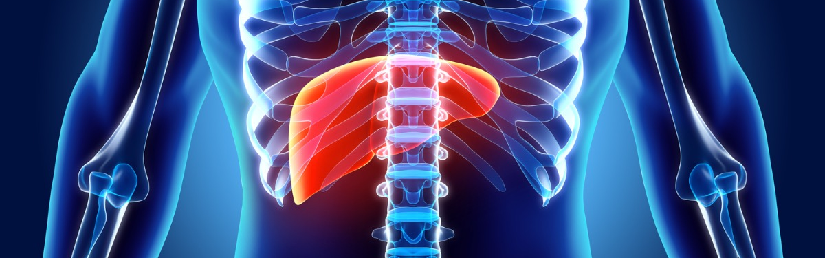 Illustration of liver in body