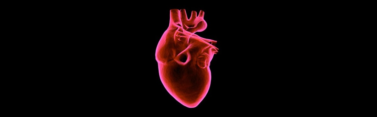 New stem cell combination could help to repair damaged hearts